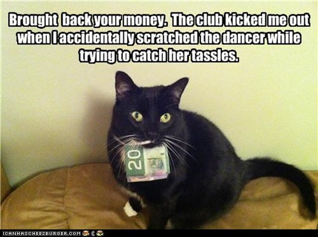 cat-with-money