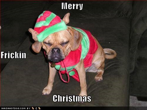 funny-dog-pictures-grumpy-dog-wishes-you-a-merry-christmas