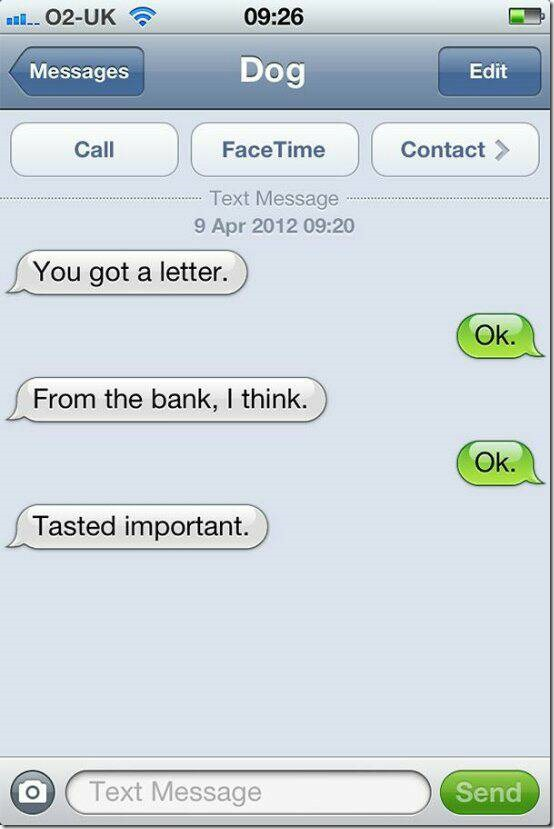 dogs_are_getting_better_at_texting_every_day_23_photos15_1400039577