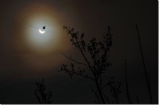 Eclipse Image-1