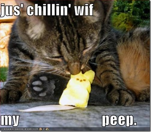 funny-pictures-cat-eats-marshmallow