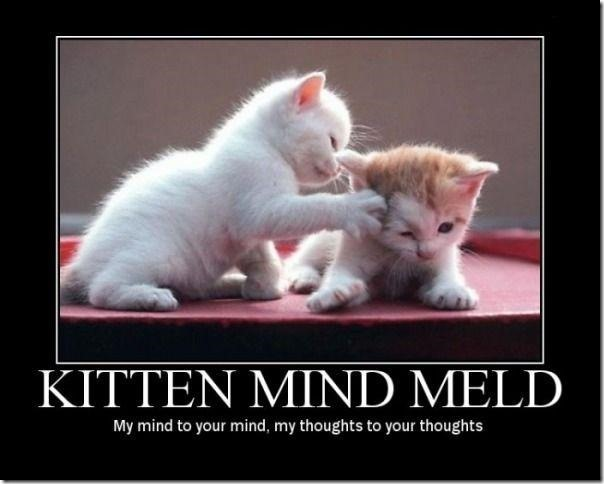 Kitten Mind Meld