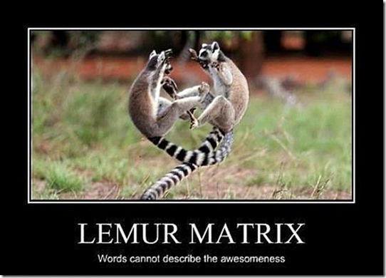 Lemur Matrix11 (2)