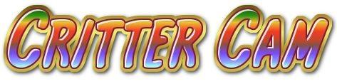 Critter Cam 1