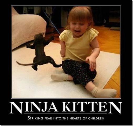 Ninja Kitten