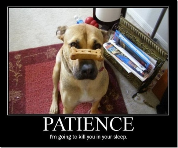 patience3