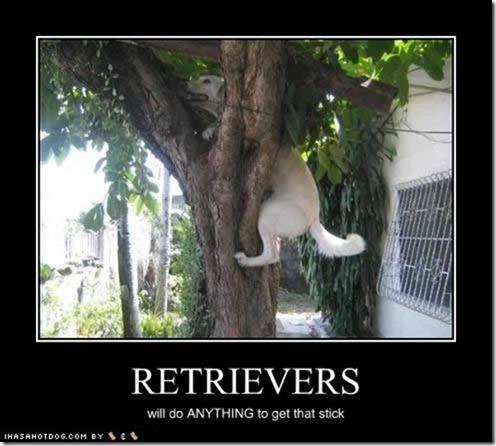 Retrievers