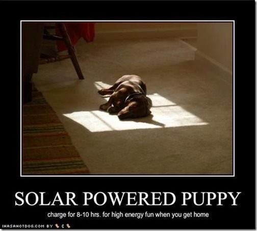 solar powered puppy