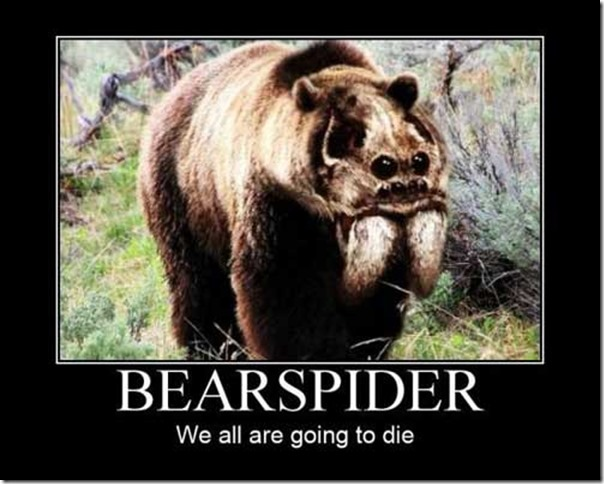 bearspider