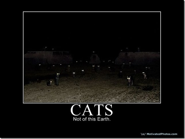 Cats2