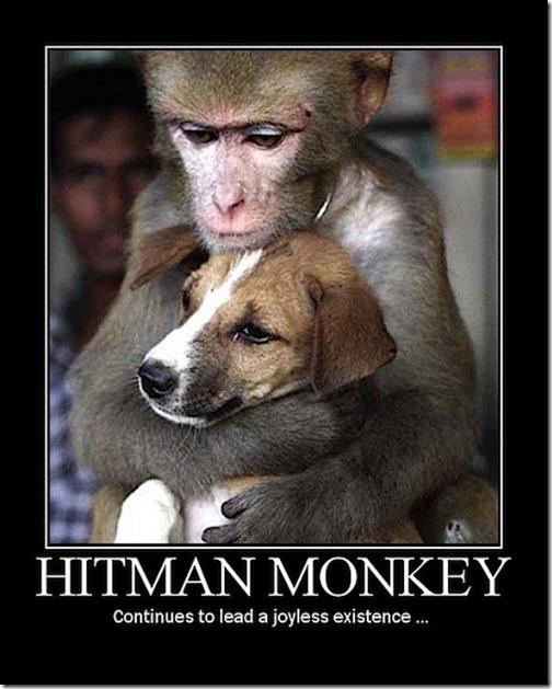 hitman_monkey