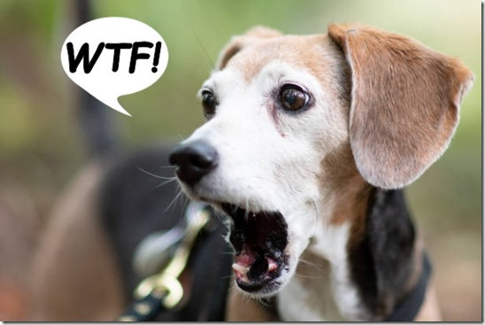 Beagle is shocked and appalled